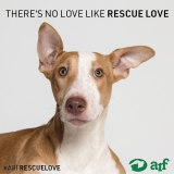 Posted April 23, 2018 - Jamie - ADOPTED