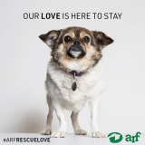 Posted May 14, 2018 - Georgette - ADOPTED