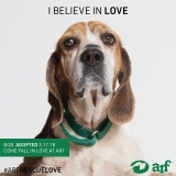 Posted October 8, 2018 - Bob - ADOPTED