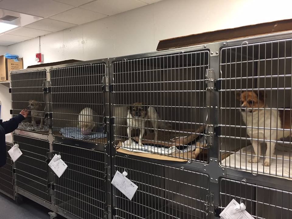 The dogs settle in at the adoption center.