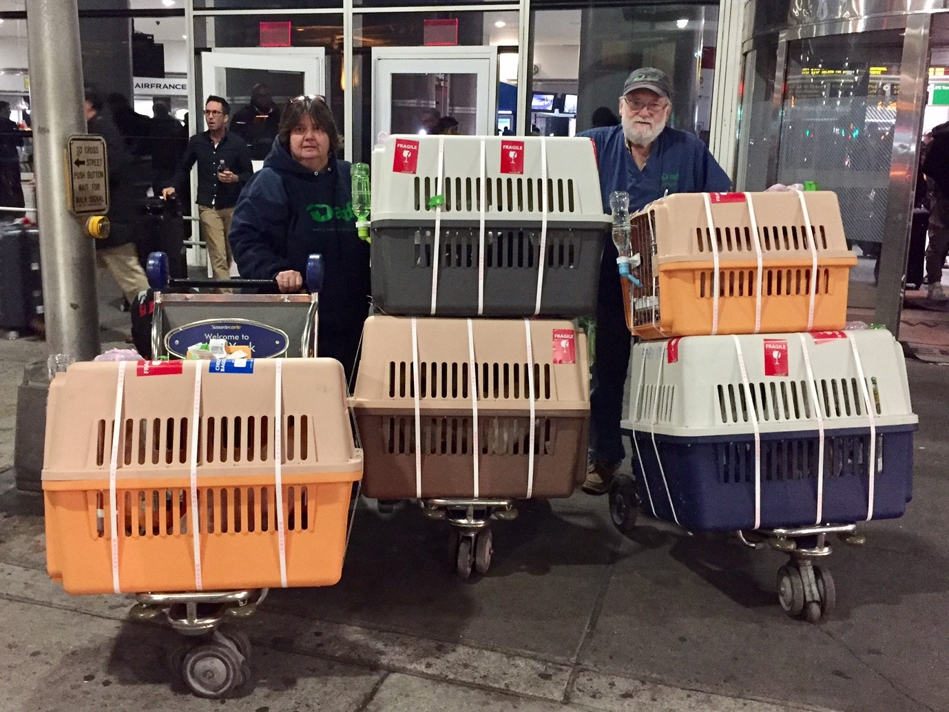 ARF's Michele Forrester and Jamie Forrester take the dogs on the final leg of their journey to the ARF Adoption Center in Wainscott.