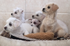 The five puppies