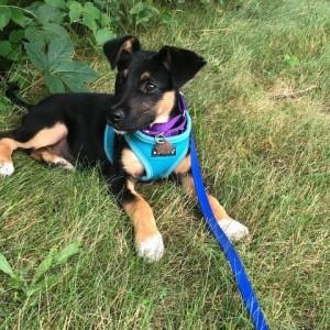 Maye, adopted 7/25/2020