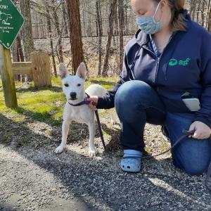 Staff member Jessica with Sierra on a walk. Sierra, adopted 6/30/2020
