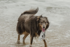 More fun at the beach