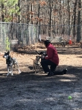 Students film volunteer Nancy Buscemi working with the shy dogs