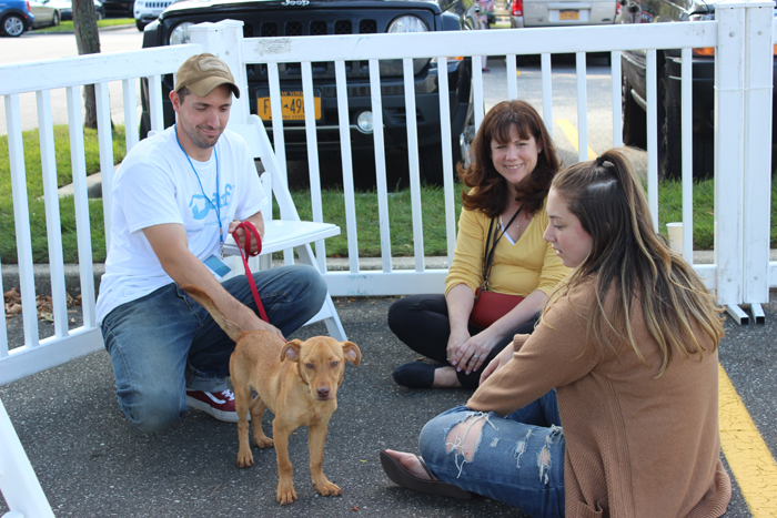 ARF's Bill Gardiner helps out showing an adoptable dog.