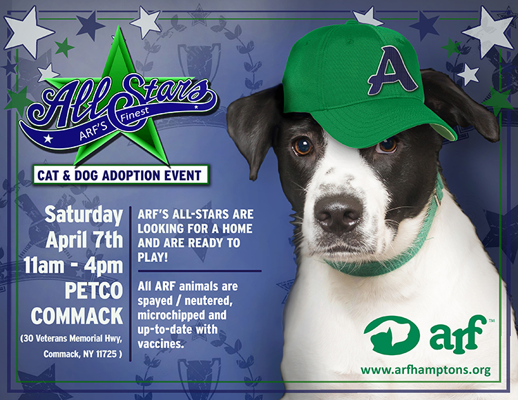 Arfs all stars in commack animal rescue fund of the hamptons if you are looking to adopt a dog and have another one at home please bring them for a meet and greet free admission adoption fees apply m4hsunfo